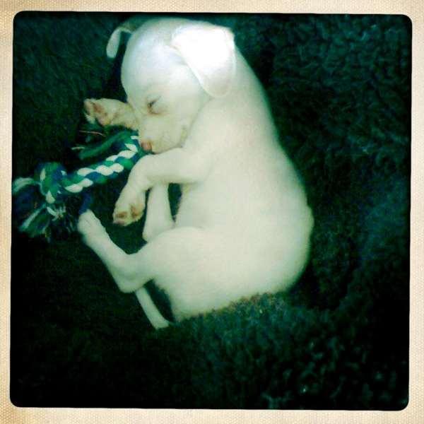 Frankie Muniz's puppy Xophe